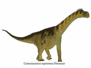 Camarasaurus Dinosaur Side Profile with Font