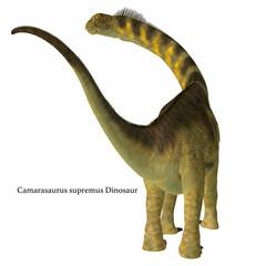 Camarasaurus Dinosaur Tail with Font