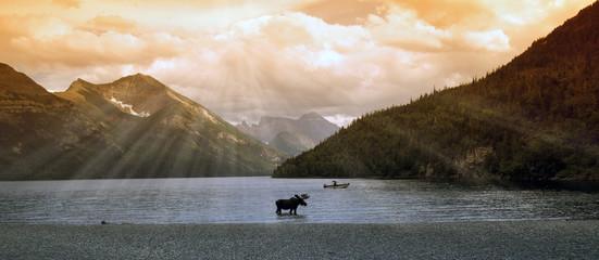 moose in a mountain lake (waterton lake, alberta, canada)