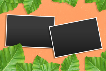 photo frames with Tropical background