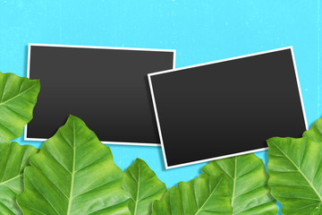 template photo frames with Tropical leaves background