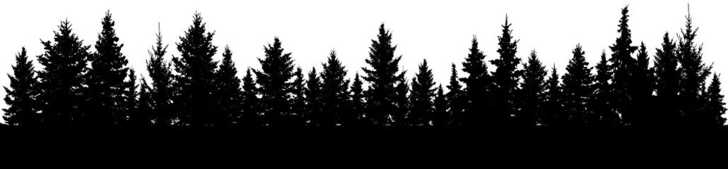 Fir trees silhouette. Forest, vector