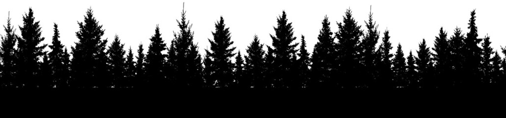 Seamless pattern of fir trees, silhouette of forest. Vector