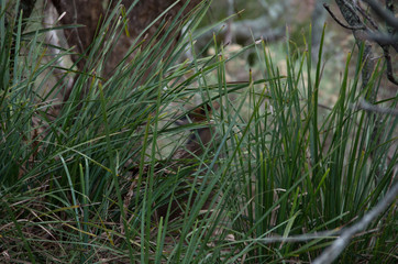 Grass hiding an animal