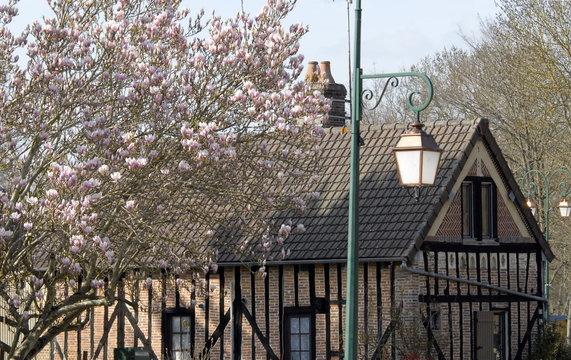 Réverbère, magnolias et maison normande à colombages, ville de Rugles, département de l'Eure, Normandie, France