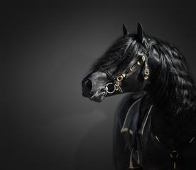 Fototapete - Portrait of black Pura Spanish stallion in authentic bridle on dark background.