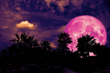 full pink moon back silhouette palm tree in dark night heap cloud
