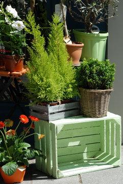 Ville de Vernon, plantes vertes et arbustes, caisse verte, chez un fleuriste, département de l'Eure, Normandie, France