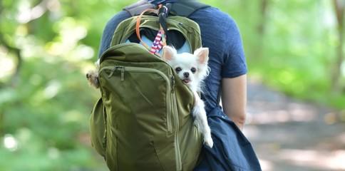 緑の森・ペットと散歩する男性