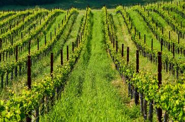 Papiers peints Vignoble Vineyards in California, USA