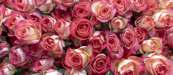 Delicate pink roses.