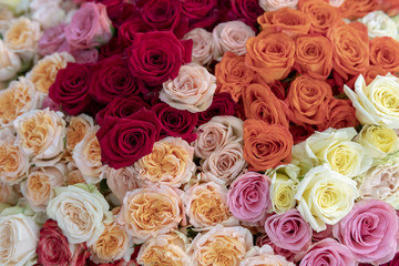 Red, cream, orange, pink and white roses.