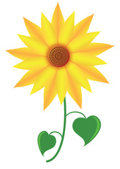 Flower Sunflower. The whole plant sunflowers or marigold. Vector format.