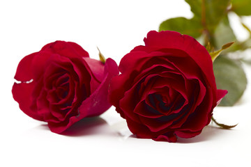 Two red rose on white background