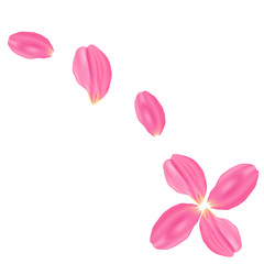 The set pink rose petals. White background