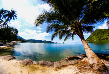 beach with palmtree in Thailand