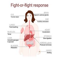 fight-or-flight response. stress response system