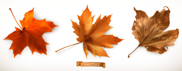 Maple leaf. 3d realistic vector icons Wall mural