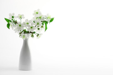 cherry twig in bloom in vase