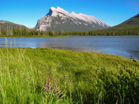 Tranquil Canadian landscape: green field, river and mountain, Alberta, Canada