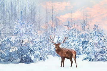 Wall Mural - Lonely noble deer mail with big horns against winter fairy forest at sunset. Winter Christmas holiday image.