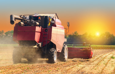 red combine harvester soybean harvest against the backdrop of the sun in the sky. The farm operates in the field in the autumn season