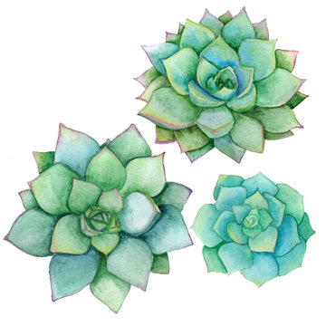 Succulent set isolated on a white background. Watercolor hand drawn illustration. Perfect for card, wedding invitation, birthday card.