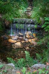 wunderschöne kleine Quelle im Harz, vertikal  makro