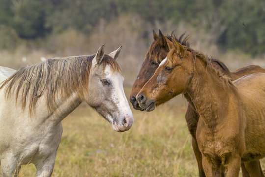 Spanish Mustang horses with skin problems