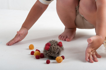 Small hedgehog in studio on white background with raspberry berries. Hands of child close-up. Concept of healthy lifestyle in nature, love of peace, respect for nature, childhood in the village