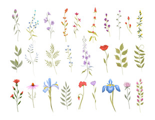 Fototapeta Collection of wild flowers. Set of floral elements