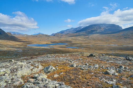 Arctic Vistas