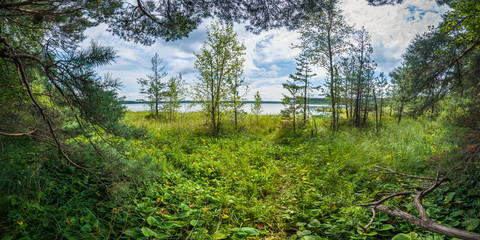 Panoramic view of the densely overbed coast of the lake with branches of trees along the edges in the foreground