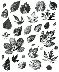 Set of autumn leaves on a white background. Leaf print
