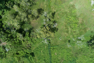 Forest growth trees,nature green forest backgrounds aerial view drone shot.