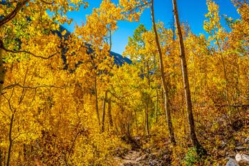 Beautiful Fall Hike in Aspens in Grand Lake, Colorado