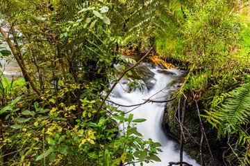 Small off shoot of Kaituna River - Rotorua