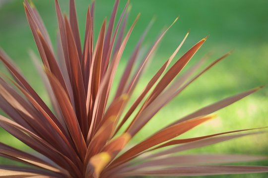 abstract leaves