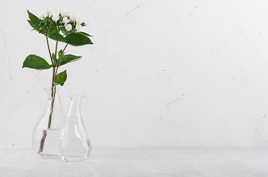 Small white flowers and green leaves in white light soft grunge interior, copy space.