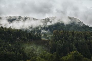 Fototapete - Photo of beautiful moody misty green coniferous forests in austrian Alps