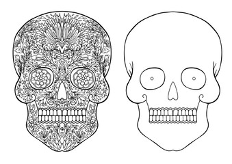 decorated with flowers skull and skull contour for drawing
