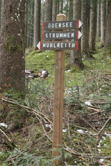 wooden sign post in forrest, no people