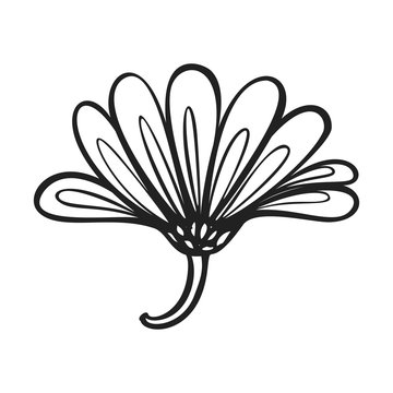 Herb calendula icon. Simple illustration of herb calendula vector icon for web design isolated on white background