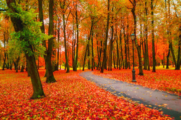 In de dag Baksteen Fall landscape with colorful fall trees and orange fallen leaves. Fall deserted alley