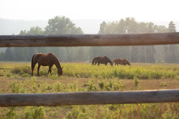 horse in a field behind fence