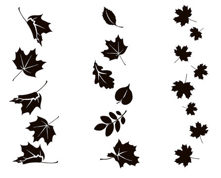 Autumn falling leaves. Vector silhouette of maple, oak, rowan and other leaves. Set of autumn decorations.