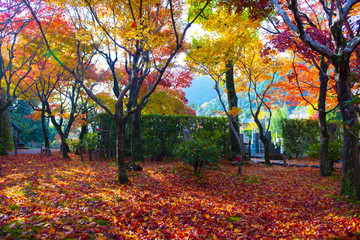 Autumn season scene background nature in the Park in Kyoto, Japan.