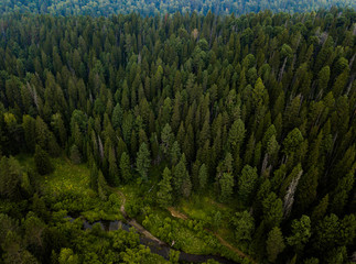 Taiga forest from aerial view. Nature landscape. Coniferous forest. Siberia, Russia