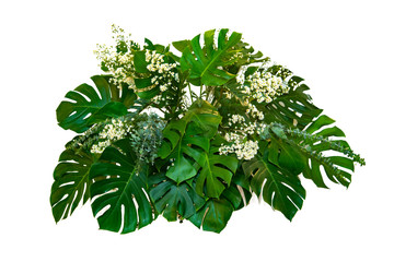 monster Leaves used in modern designs tropical leaves foliage plant bush floral arrangement nature backdrop isolated