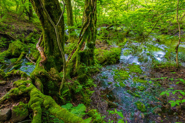 Beautiful Scene of Forest and Spring in Japan